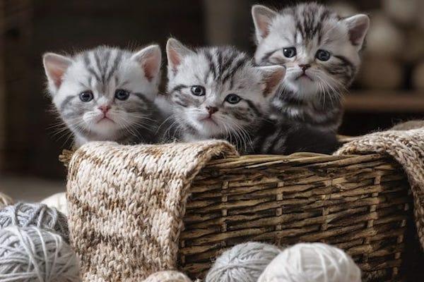 gattini appena partoriti
