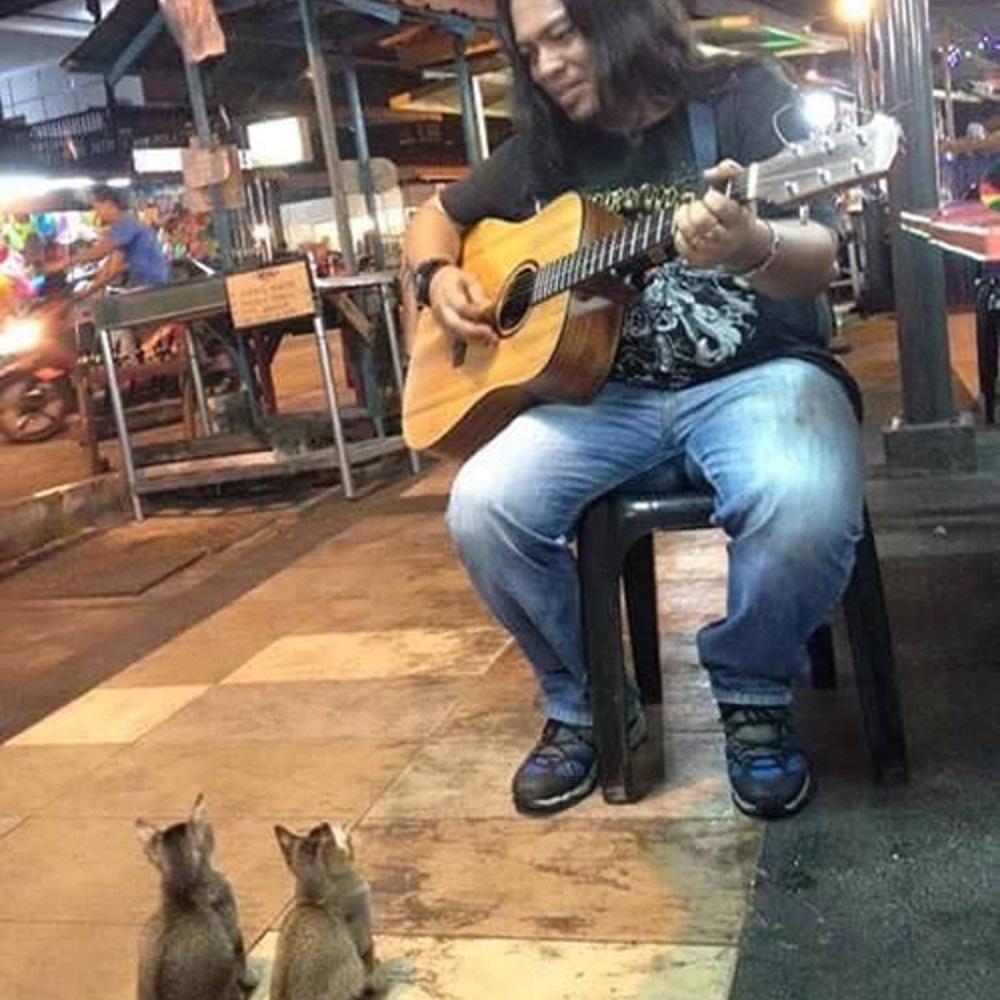 pangkor gattini ascoltano musica