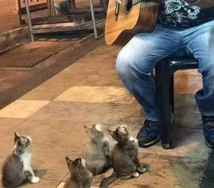 pangkor gatti ascoltano artista di strada