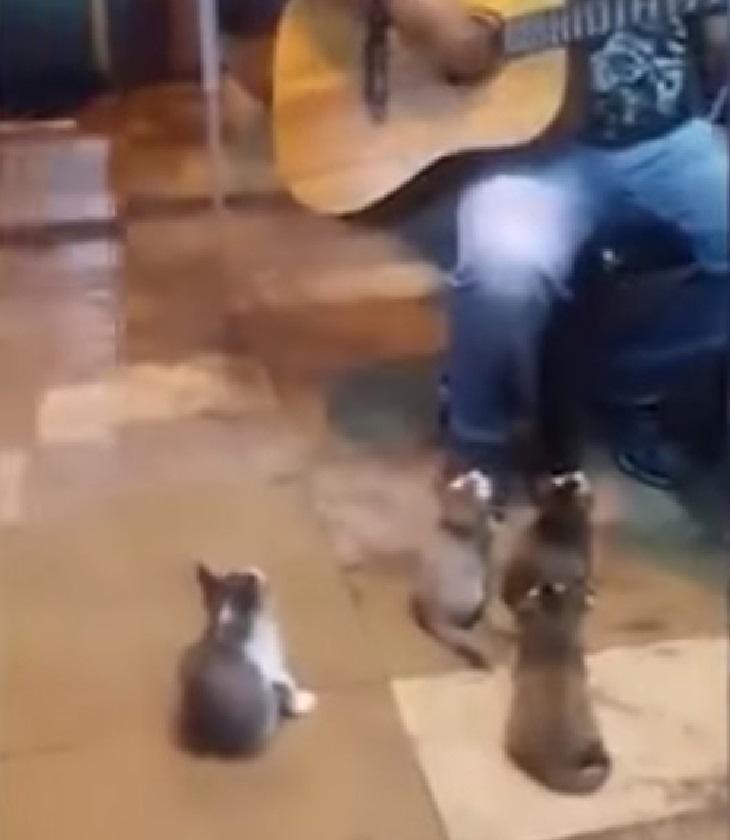 pangkor gatti curiosi musica