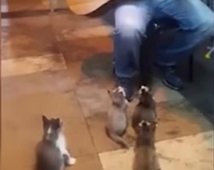 pangkor gatti evento chitarra