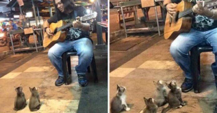 gattini curiosi ascoltano musica artista di strada