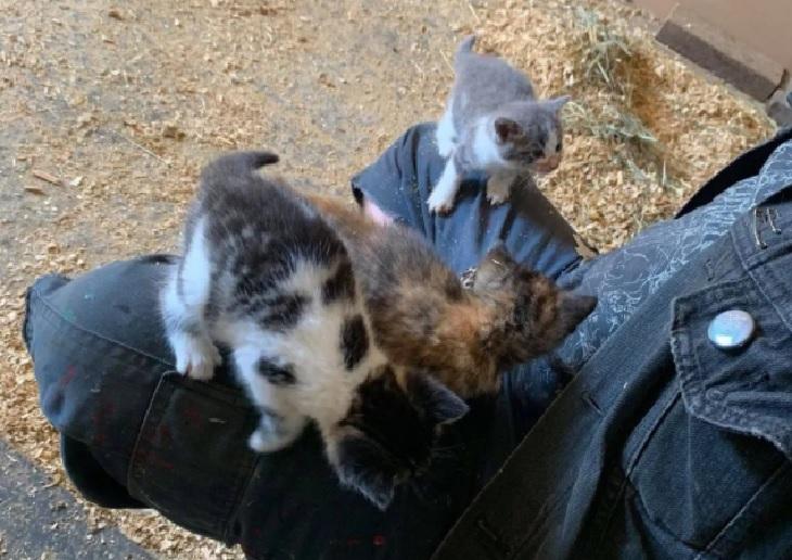 pilorie gattini fratelli fattoria