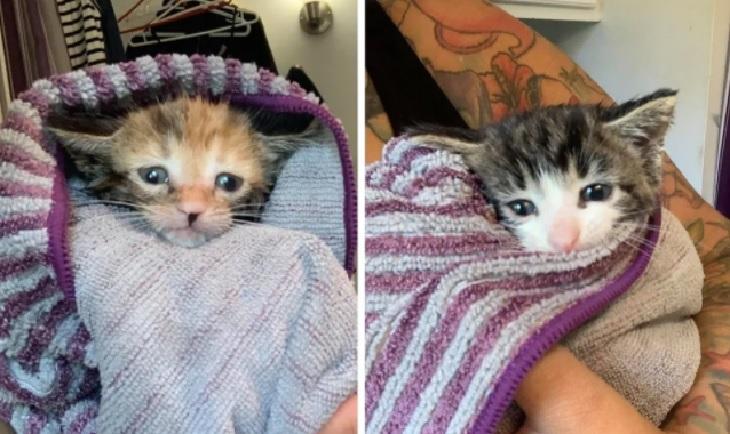 pilorie gattini 3 piccoletti casa