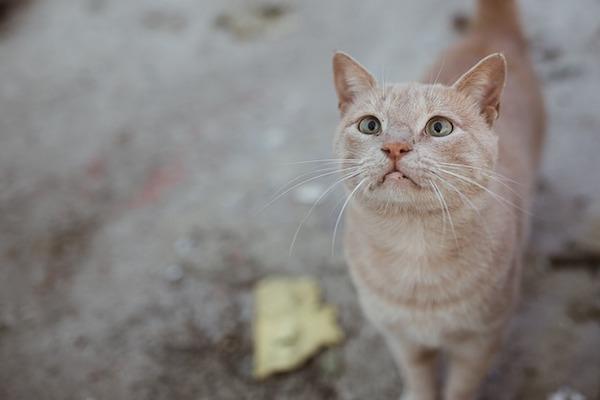 gattino con musetto impaurito
