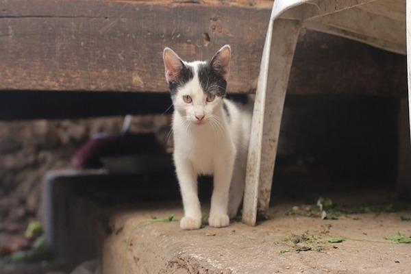 fare vaccini al gattino