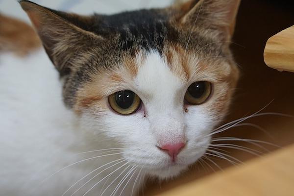 gattino che deve fare il vaccino