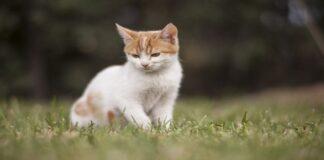 vaccini da fare ai gattini