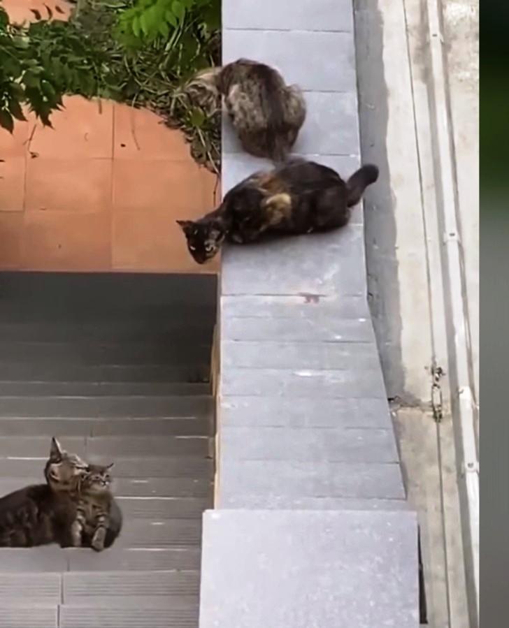 mamma gatta e il suo gattino