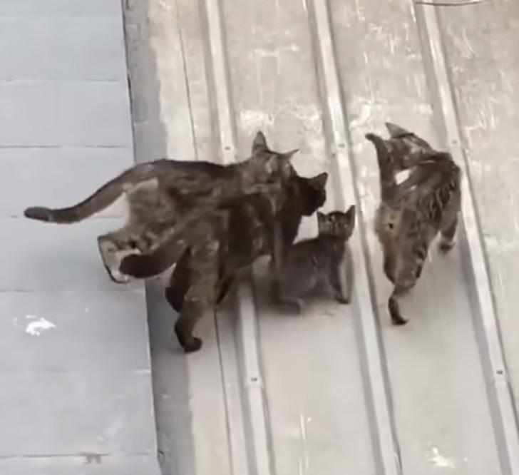 gattino e gatte