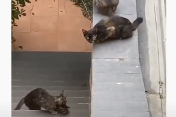 mamma aiuta il gattino