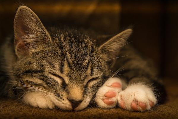 gattino dorme tantissimo rilassato