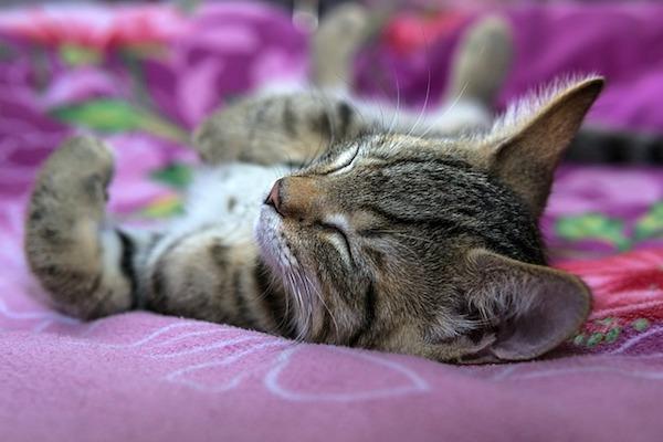 gattino dorme e si sente al sicuro