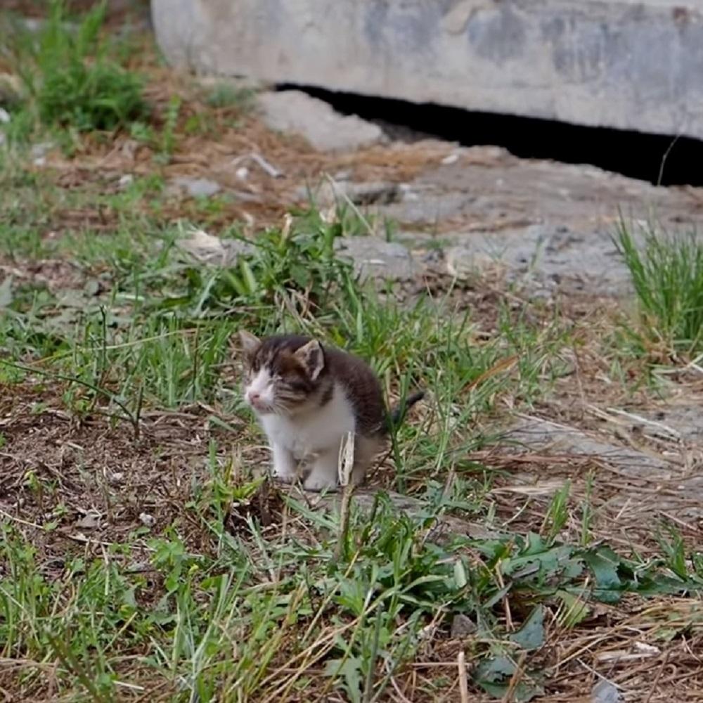 dessie gattino strada quartiere