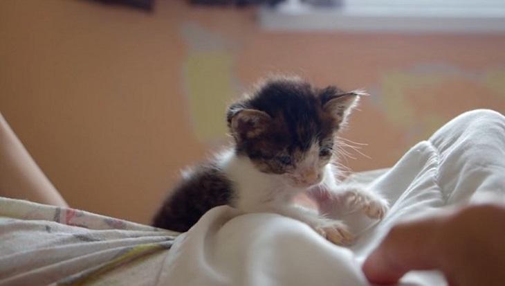 dessie gattino conosce fratellini