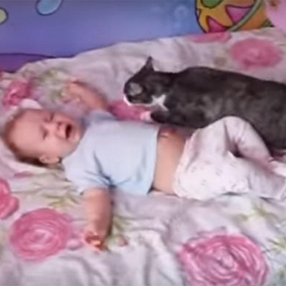 gatto neonato entra azione