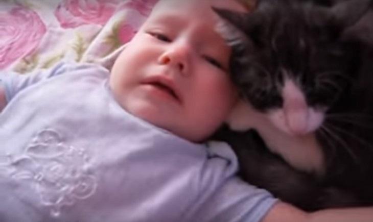 gatto neonato tecnica speciale