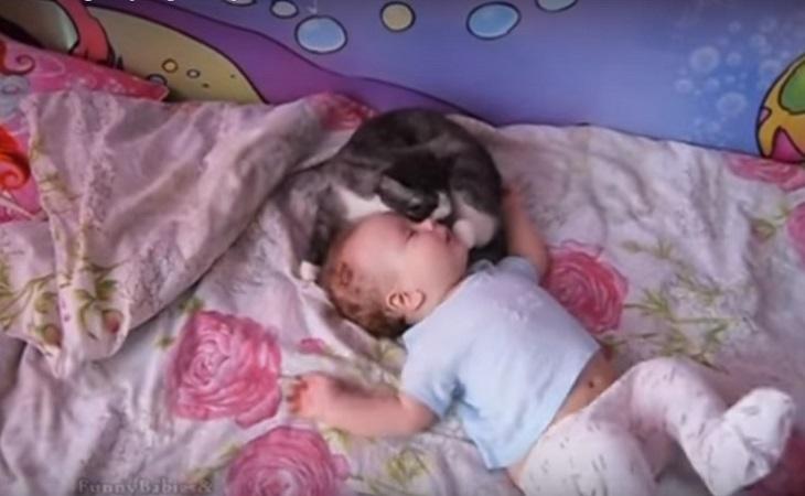 gatto neonato video popolare