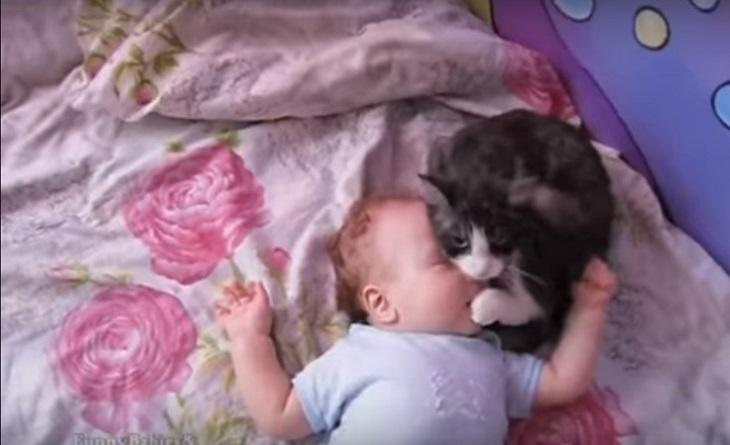 gatto neonato trucco speciale