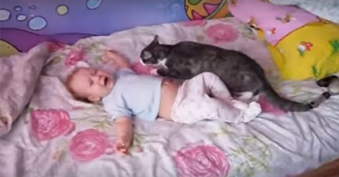 gattino entra azione calma neonato che piange