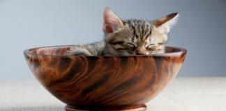 gattino strano con la sua ciotola