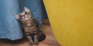 consigli per gattino in viaggio