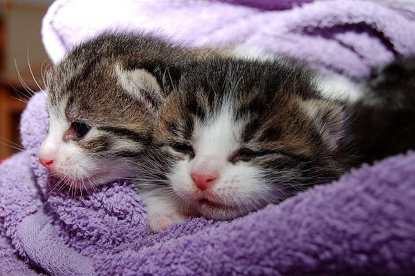 gattini di rilassano insieme