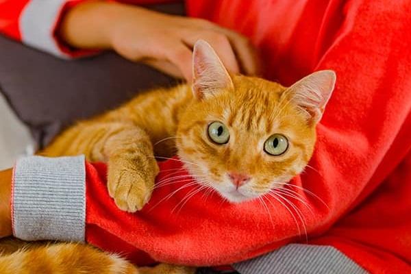 gatto rosso in braccio