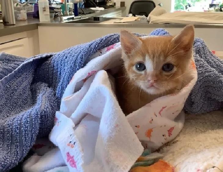 quark gattino arrivo clinica specializzata