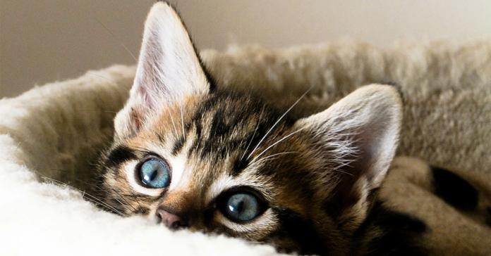 gattino nascosto nella cuccia