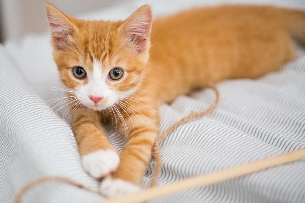 gattino gioca con filo giallo