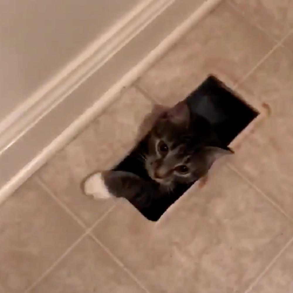 brena gatto rumori grata