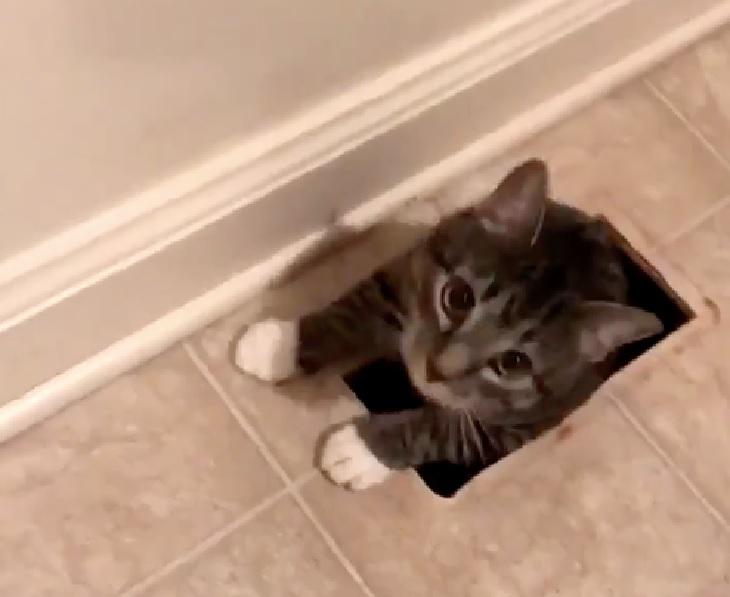 brena gattino entra casa