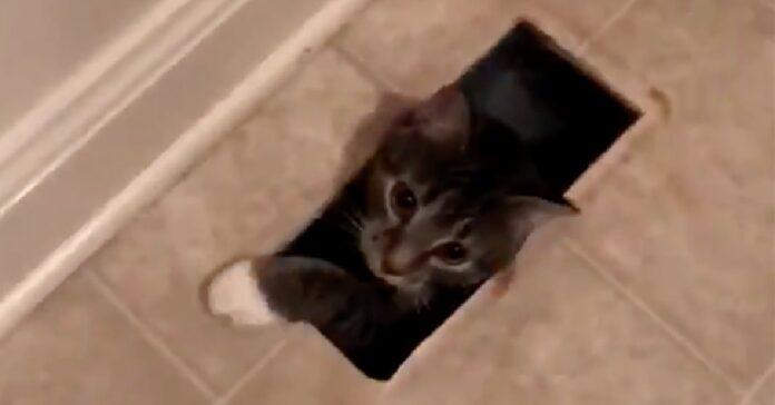 gattino si intrufola casa sconosciuta per sorpresa