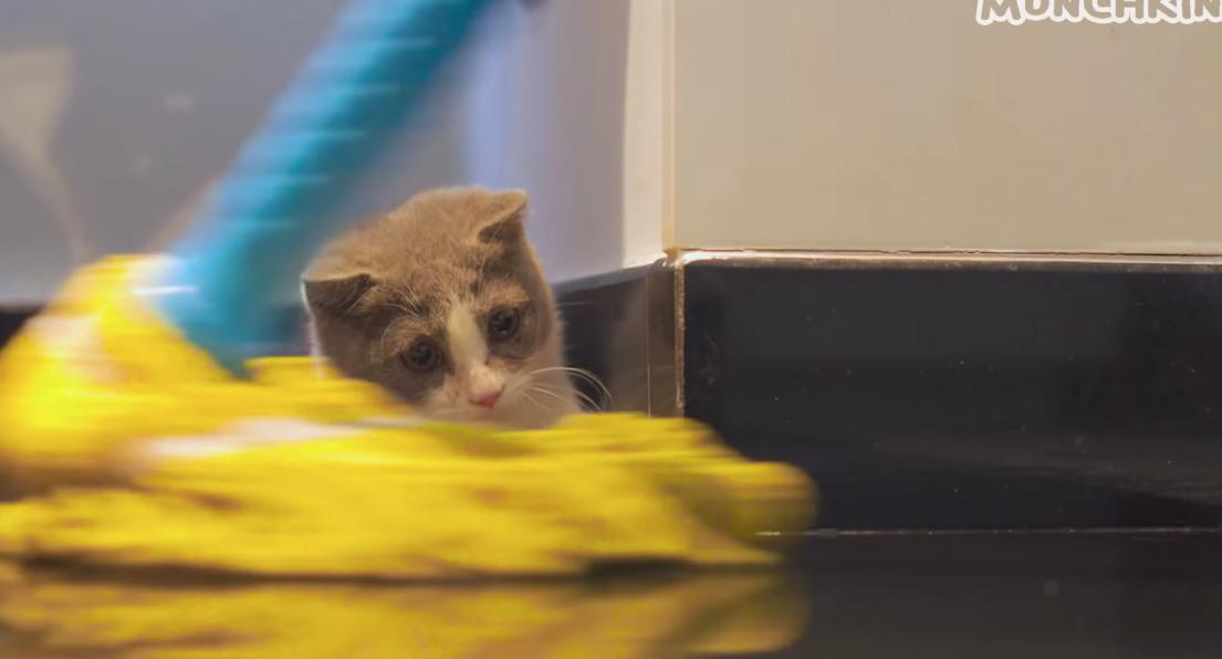 Gattino vede il mocio
