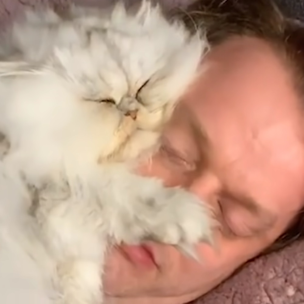 eric gatto ama dormire testa