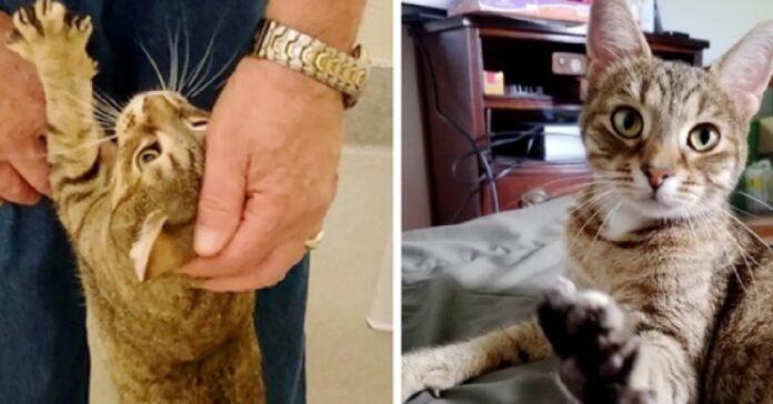 gatto caduto tombino salvato trova famiglia