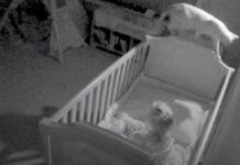 gatto controlla situazione notte culla