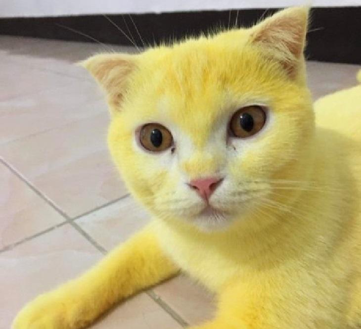 thamappa gatto uso curcuma