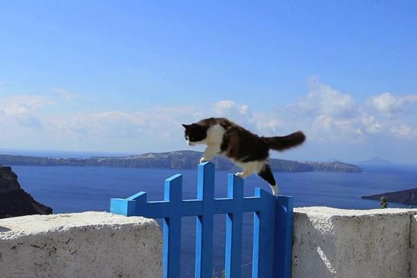gatto che si arrampica su un muretto