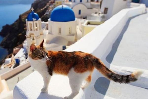 gatto con panorama