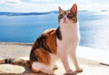 gatto che vive vicino al mare