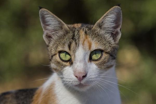 gatto che vive in mezzo alla natura