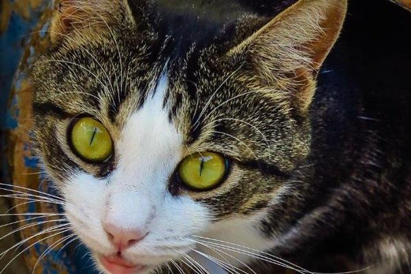 gatto di due colori