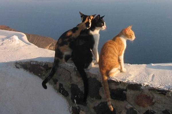 tre gatti che guardano il mare