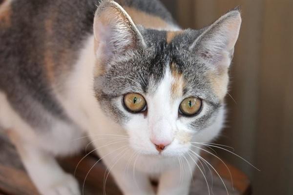 gatto con lo sguardo curioso