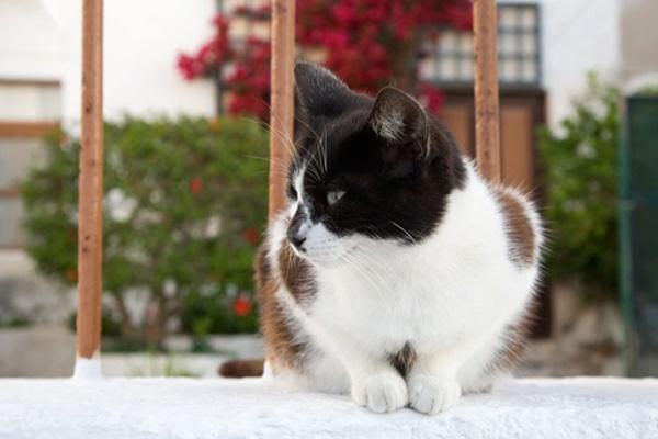 gatto vive in una casa con giardino