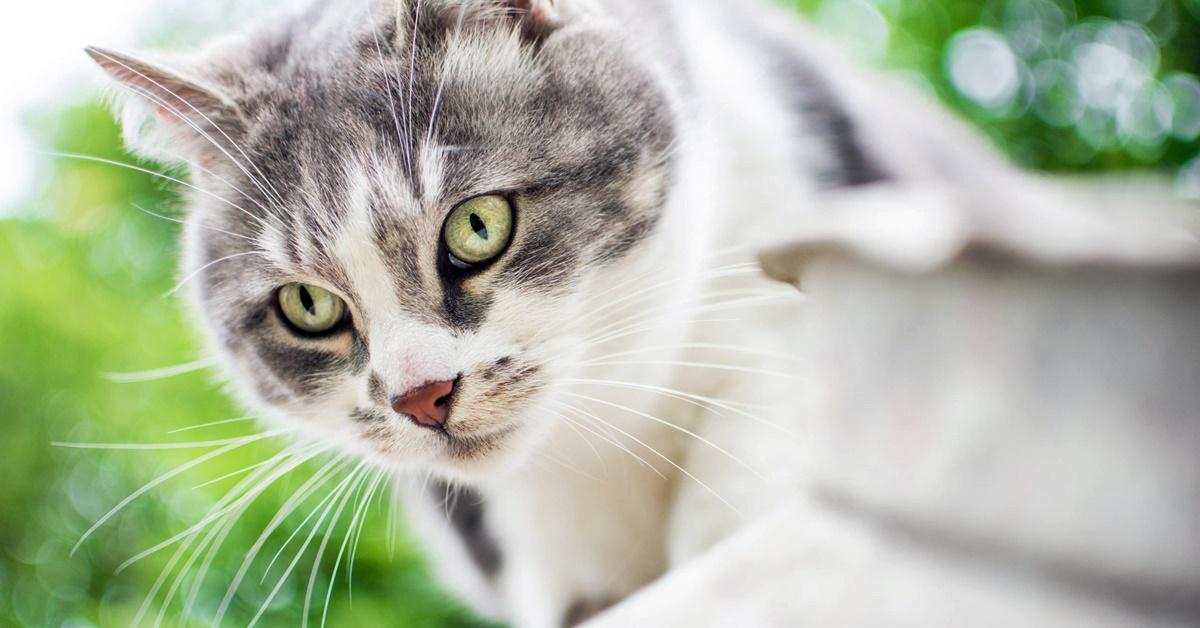 gatto che fa un agguato