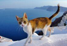 gatto che cammina su un muretto
