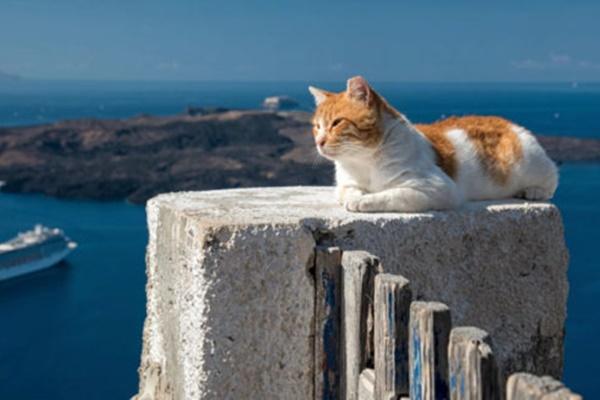 gatto in riva al mare